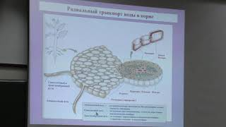 Носов А. М. - Физиология растений I - Водный обмен растений, растительная клетка