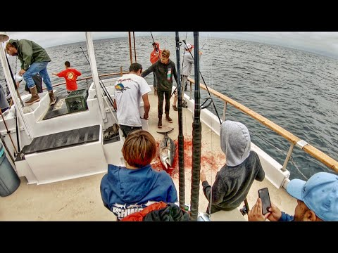 Heartbreak! Bluefin Fishing On The San Diego Out Of Seaforth Sportfishing