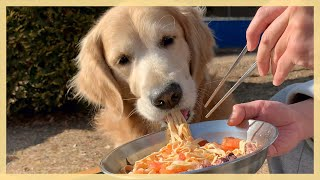 We Cooked Some Spaghetti, And This Golden Retriever is Slurping Noodles