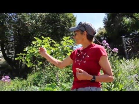 Berkeley Urban Farm: 2768 Shasta Road, Berkeley
