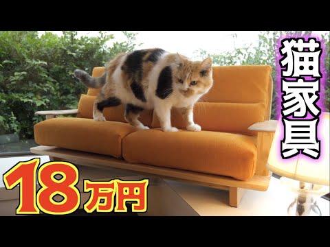 完全オーダーメイドの猫家具を購入!
