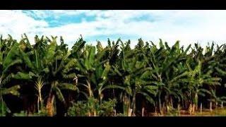Harry Belafonte - Banana Boat Song (Day O)
