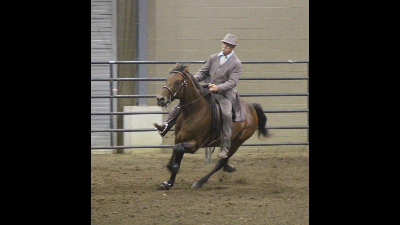 National Racking Horse Association Alabama State ...