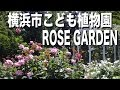 Rose Garden BGV 横浜市こども植物園のバラ 小鳥のさえずりも、うれしい