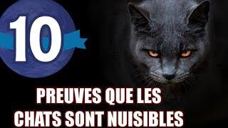 10 preuves que le chat est un animal nuisible - LE PUTACLIC