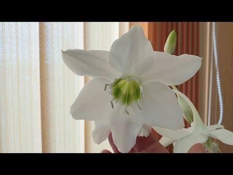 Комнатные цветы март 2019 / обзор цветов в офисе