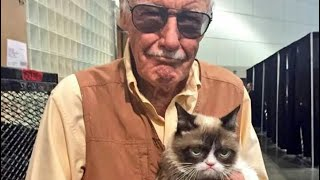 Grumpy Cat Memes   Spam F In The Chat