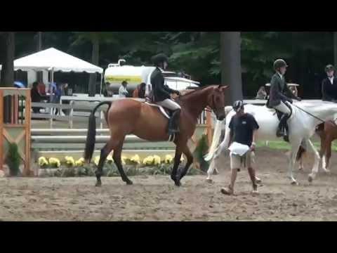 """BRANDO 3'0"""" Pre-Green's Hunter Hack at Saratoga Classic Horse Show"""