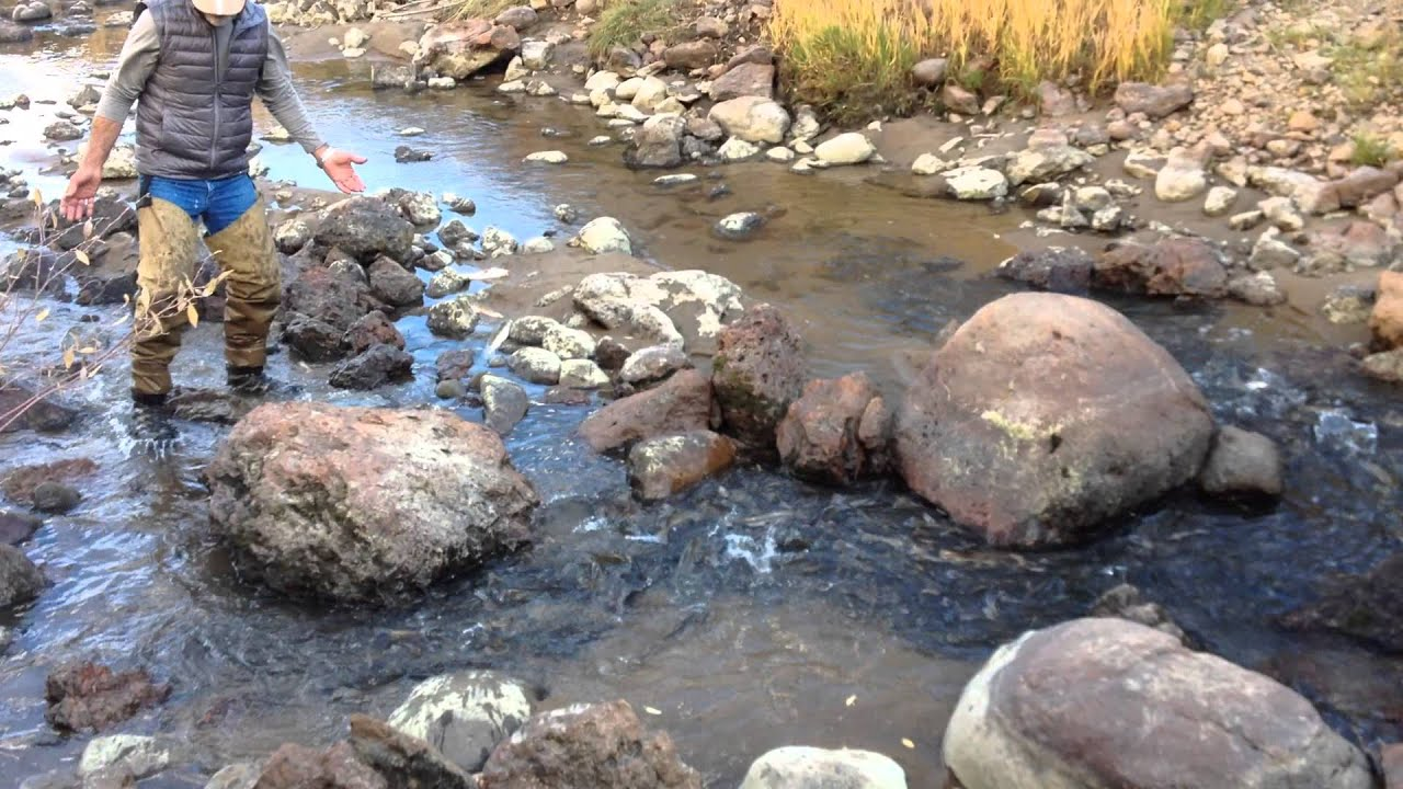 Dying fish north clear creek colorado when san luis for Clear creek fishing