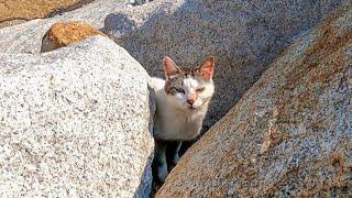 岩の隙間の野良猫家族、子猫が大人しくしている間に母猫がモフられに出てきた