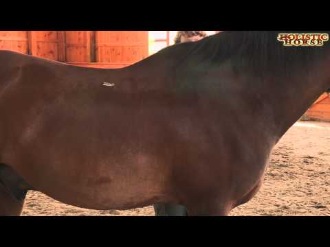 ultrasound therapy machine for horses