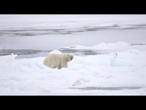 Polarbär Spezial 2018
