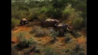 WHITE GOLD Trailer - a Kenyan perspective on elephant poaching and the ivory trade