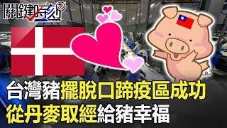 「台灣豬重返國際」擺脫口蹄疫區拔針成功 從丹麥取經「給豬幸福」!! 關鍵時刻20190702-5 馬西屏