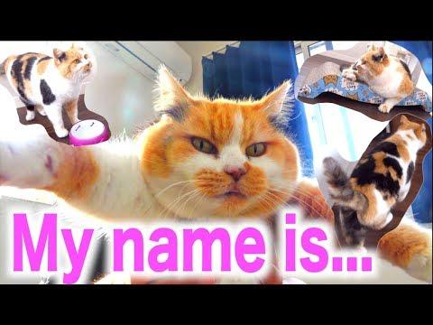 猫の名前募集結果発表!今夜、名前が決まります!