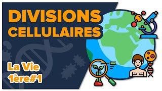 Les divisions cellulaires des eucaryotes -SVT - LA VIE 1ère spé #1 - Mathrix