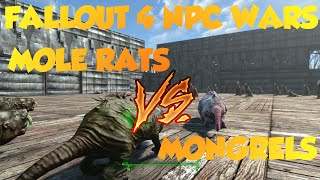 Fallout 4 NPC Wars!  Mongrels vs. Mole Rats!!!