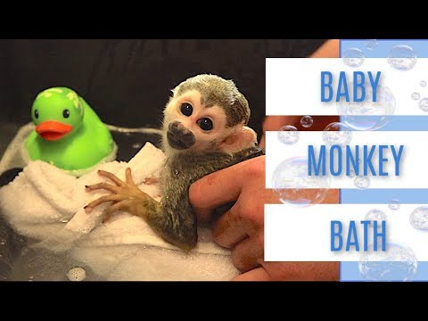 Baby Monkey oLLie | Bubble Bath with Rubber Ducky #MonkeyBooCrew