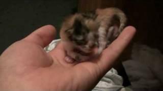 первый котеной моей кошки