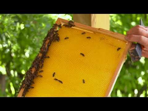 Gut Dietlhofen und seine Bienen!