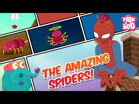 download How Amazing Are Spiders! - The Dr. Binocs Show | Best Learning Videos For Kids | Peekaboo Kidz