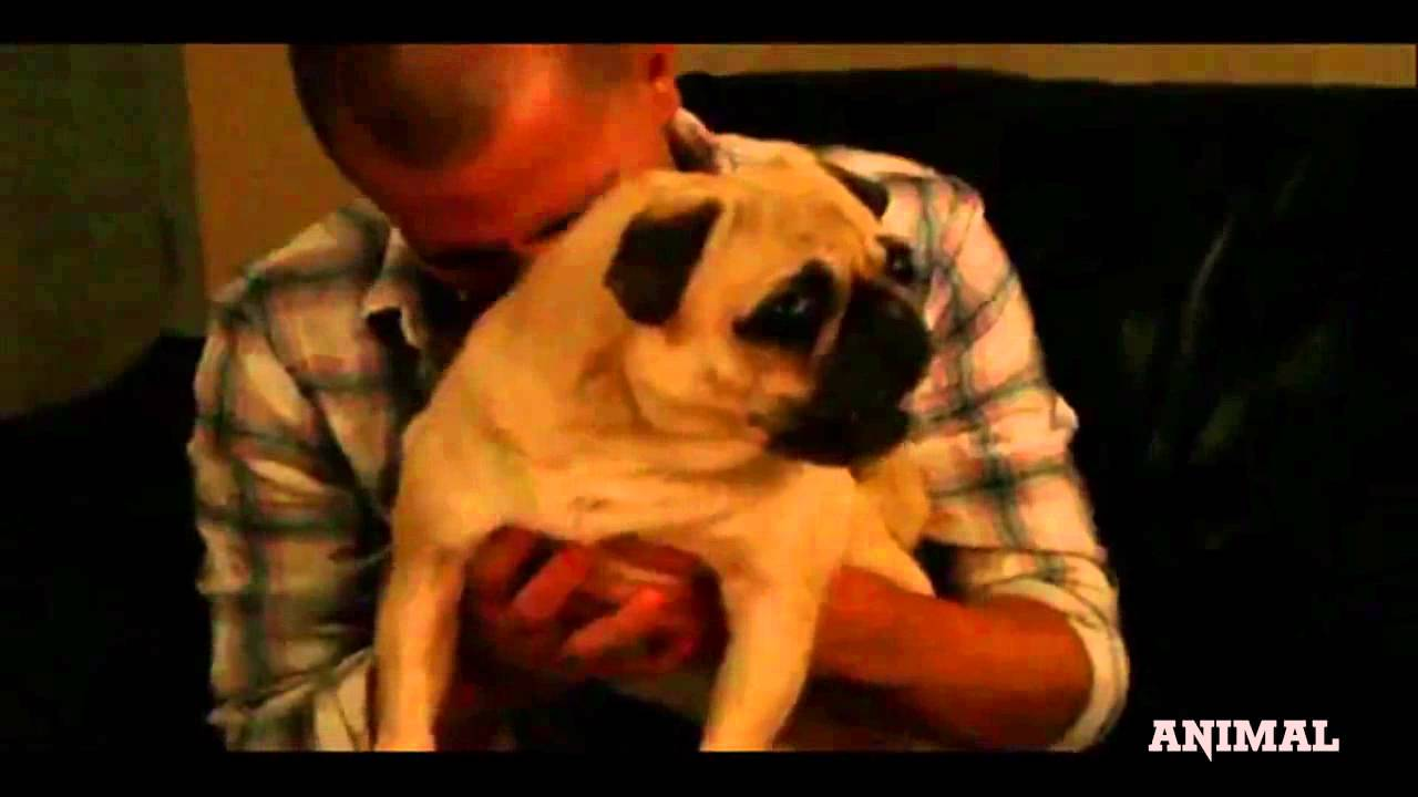 Pug Destroyer - Dogs Singing Death Metal - YouTube