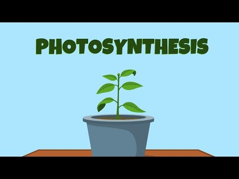 photosynthesis - video for kids