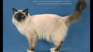 Породи кошек