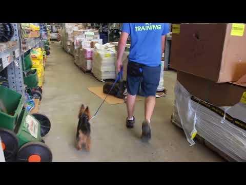 dog-training-at-a-store-|-off-property-dog-training