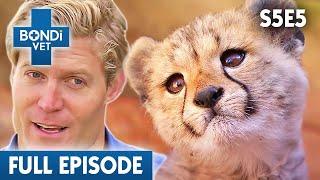 baby-cheetah-s05e05-bondi-vet
