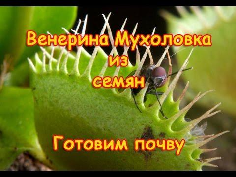 Как садить семена ВЕНЕРИНОЙ МУХОЛОВКИ!!!