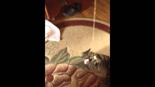 Когда мне и коту нечего делать
