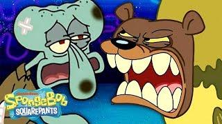 The Sea Bear Attacks Squidward, SpongeBob & Patrick! 🐻 SpongeBob SquarePants