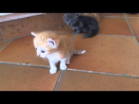 Cute kitten/Gattini appena nati