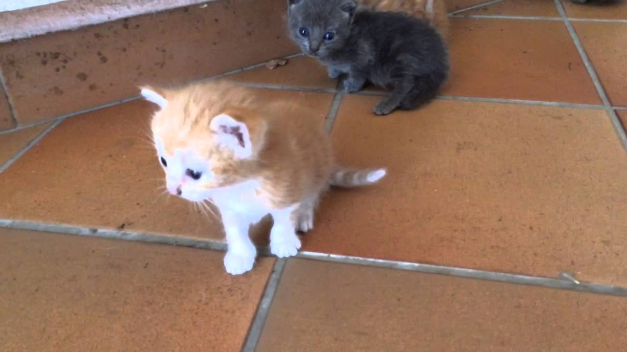 Ben noto Cute kitten/Gattini appena nati - YouTube BN96