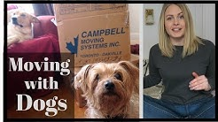 Tips for MOVING with a DOG | Reduce STRESS During a Move