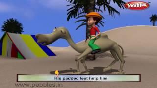 Camel Nursery Rhyme | Animal Rhymes | Nursery Rhymes With Lyrics | Nursery Rhymes 3D Animation