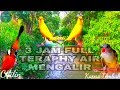 Masteran Kombinasi Cililin Vs Kenari Kapas Tembak Diiringi Teraphy Air Mengalir 3 Jam Full Full isian(.mp3 .mp4) Mp3 - Mp4 Download