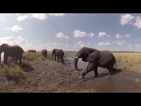 360 Video on Chobe River - Botswana