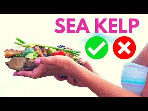 Health Benefit and Side Effects Of Eating Kelp
