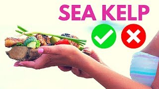 Kelp for Weight Loss Kelp Side Effects Kelp Supplements Benefits What is Kelp Used for