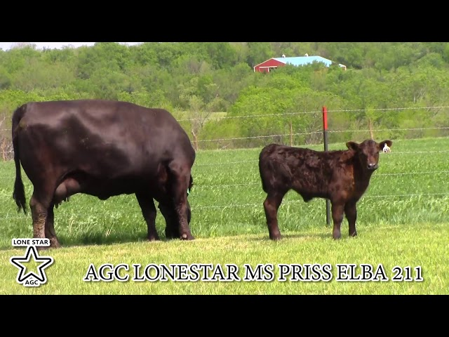 AGC Lonestar Ms Priss Elba 211