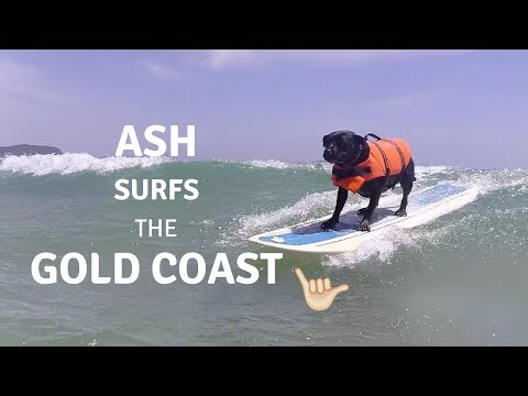 Ash Surfing Dog carves up The Gold Coast