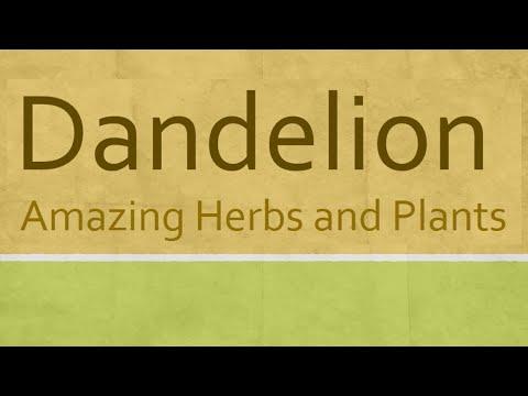 Dandelion Herb Health Benefits - Amazing Health Benefits of Dandelion Herb