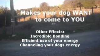 Come Push And Distraction - Natural Dog Training  - Pushing And Distraction