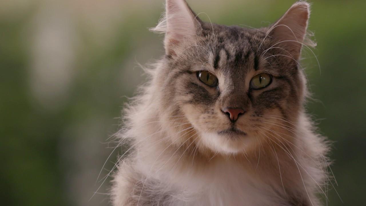 Antiestrés para gatos Beaphar CatComfort