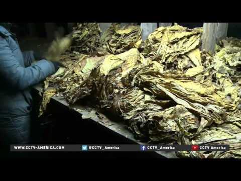 Tobacco industry still rakes in major profit despite anti-smoking laws