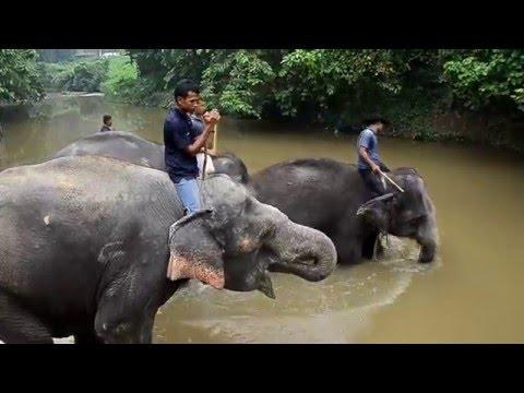 KUALA GANDAH ELEPHANT CONSERVATION CENTER | MALAYSIA | 2016