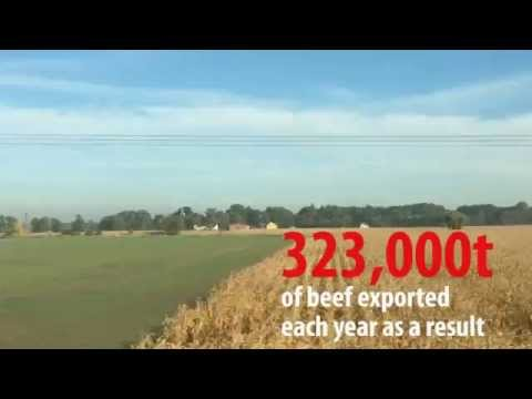 Poland: Europe's second-largest beef exporter