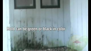 North port black mold